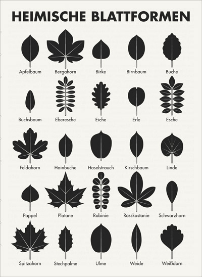 A practical sheet for Leaf Specification to identify common trees, such as apple, sycamore, birch, pear, beech, boxwood, rowan, oak, alder, ash, maple, hornbeam, hazel, lime, poplar, sycamore, black locust, horse chestnut, blackthorn, maple, holly, elm, willow or hawthorn, by their leaves.
