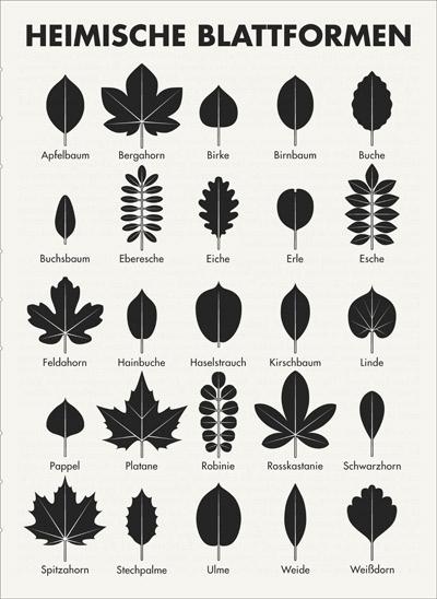 infografik blattformen f r lily lux notizbuch iris luckhaus illustration design. Black Bedroom Furniture Sets. Home Design Ideas